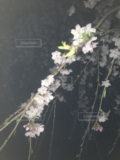 テーブルの上の花の花瓶の写真・画像素材[1149324]