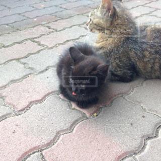 歩道の上に横たわる猫の写真・画像素材[1286655]