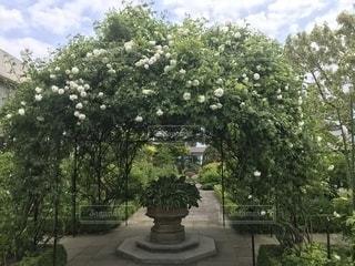 庭の大きな木の写真・画像素材[1373798]