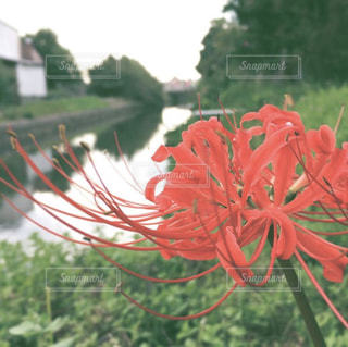 カラフルな花の植物の写真・画像素材[1373819]