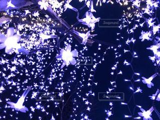 紫の花のグループの写真・画像素材[1452876]