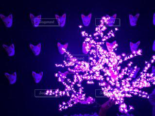 近くに暗い部屋で紫の花のアップの写真・画像素材[1452879]