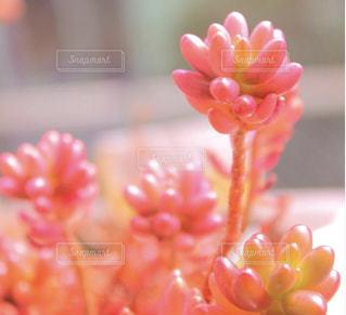 近くの花のアップの写真・画像素材[1452919]