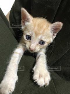 革張りの椅子に横たわる猫の写真・画像素材[2293727]