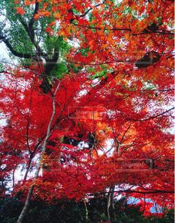 ある神社の秋の写真・画像素材[892474]