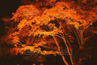 紅葉狩りの写真・画像素材[855050]