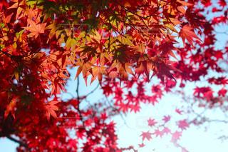 木の赤い花 - No.840526