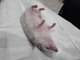 ベッドの上で横になっている猫 - No.724486