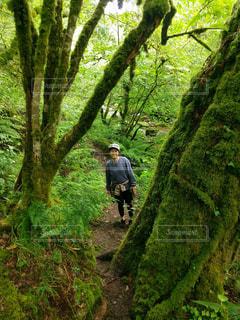 フォレスト内のツリーの横に立っている人の写真・画像素材[781614]