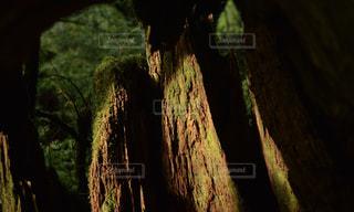 近くの木のアップ - No.1015754