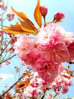 近くの花のアップ - No.779572