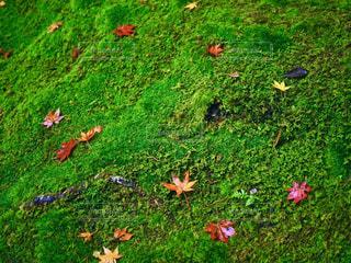 近くに緑のフィールドのの写真・画像素材[878106]