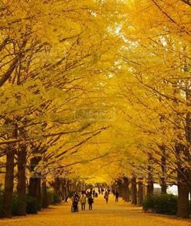 道の真ん中にツリーの写真・画像素材[1053416]