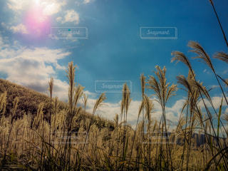 晴れた日にヤシの木のグループの写真・画像素材[1604456]
