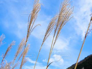 晴れた日にヤシの木のグループの写真・画像素材[1604457]