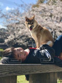 犬の写真・画像素材[2006185]