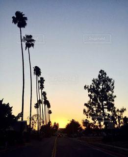 空,夕焼け,アメリカ,観光,旅行,ヤシの木,ヤシ,USA,America,バケーション,思い出,ロングビーチ,カリフォルニア,パームツリー,California,やしの木,palm tree,US,Long Beach,U.S.A.,やし
