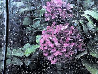 傘越しにみる花 - No.816557
