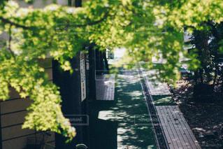 クローズ アップ庭園の - No.1158772