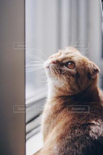 カメラを見ている猫の写真・画像素材[1254651]