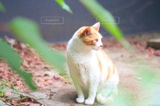 汚れフィールドの上に座っている猫 - No.1254682