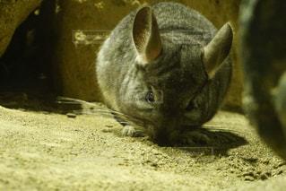 近くの地面に横になっている猫の写真・画像素材[893380]