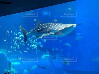 水の大きなプールの写真・画像素材[900224]