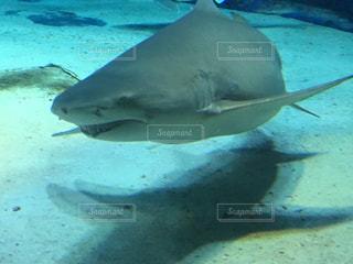 水族館,沖縄,旅行,美ら海水族館,ホオジロザメ