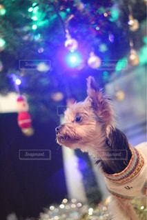 犬のぼやけた画像 - No.925248