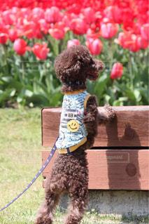草の中に座っている犬 - No.1115701