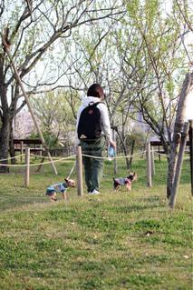 公園でフリスビーを再生する人々 のグループ - No.1115703