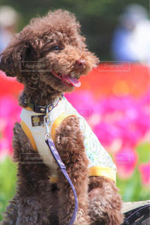 近くに犬の衣装を着ての - No.1115706