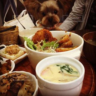 食べ物の皿の前に座っている犬 - No.1147119