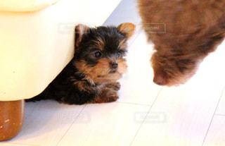 テーブルの上に座っている犬 - No.1184765