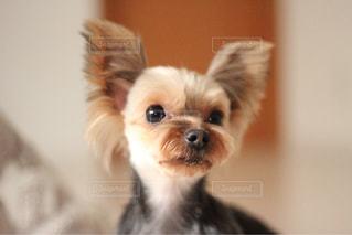 カメラにポーズを鏡の前で座っている犬 - No.1184766