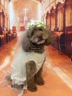 テーブルの上に座っている犬 - No.1228049