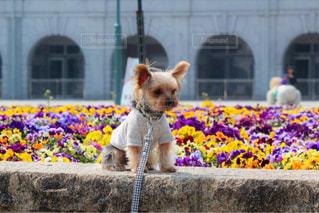建物の前に座っている犬 - No.1229790