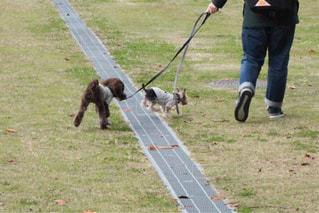 ひもにつないで犬を散歩人 - No.1248130
