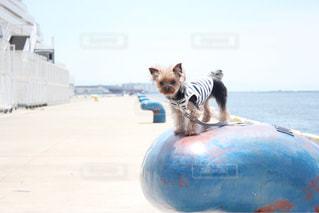 ビーチに座っている犬 - No.1248145