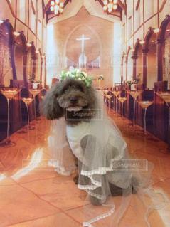 着ぐるみを着た犬 - No.1248162