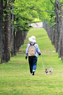 公園でフリスビーを再生する人々 のグループ - No.1248165