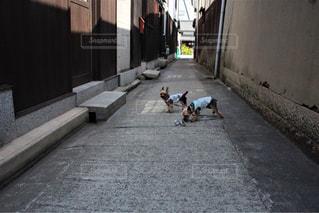 歩道の上を歩く犬の写真・画像素材[1248166]