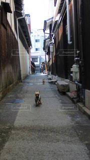 狭い街の通りの写真・画像素材[1249433]