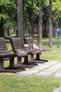 公園のベンチに座っている人々 のグループの写真・画像素材[1253134]