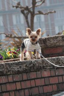 建物の上に座っている犬の写真・画像素材[1262117]