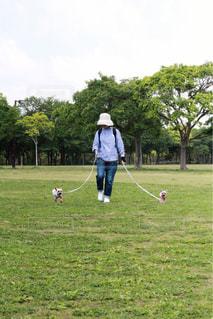 芝生のフィールドでフリスビーのゲームをプレイ人の写真・画像素材[1262129]