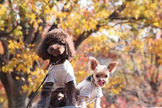 着ぐるみを着た犬の写真・画像素材[1262132]