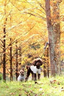 雑木林で犬の写真・画像素材[1262145]