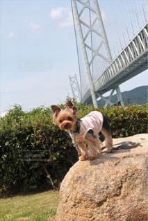 岩の上に座っている犬の写真・画像素材[1262158]