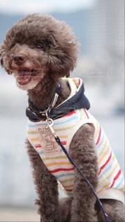 着ぐるみを着た犬の写真・画像素材[1262533]